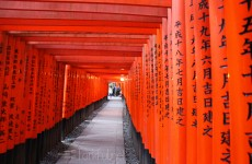 Fushimi Inari Shrine, Torri Path