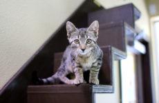 orlandocatcafe_kitten